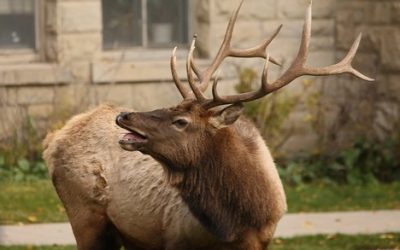 Rocky Mountain National Park Series – Park Closures for Elk Protection